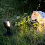 LED per Fontane e Giardini